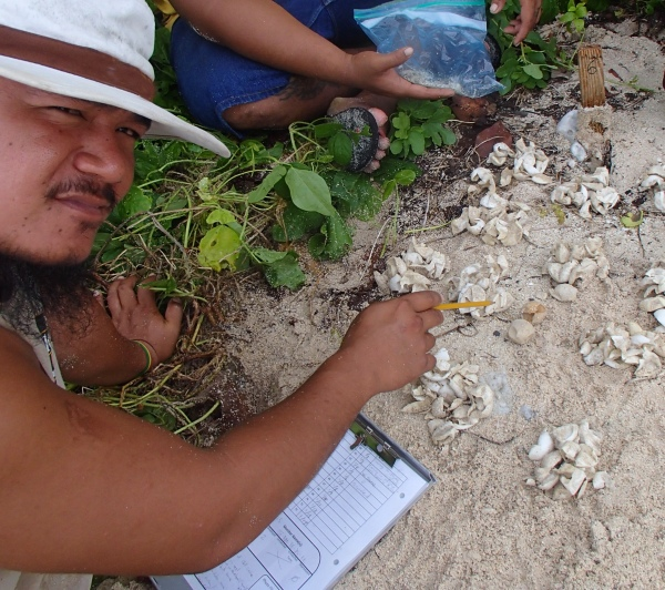 Ricky Misa'alefua inventory turtle nests that have finished hatching and record information on the clutch size and hatching success.